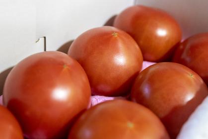 完熟したトマトが複数有る画像