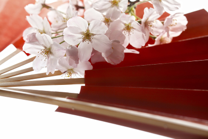 扇子と桜の花