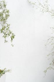 べランダの植物と白い壁