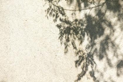 大きい石の表面の木漏れ日