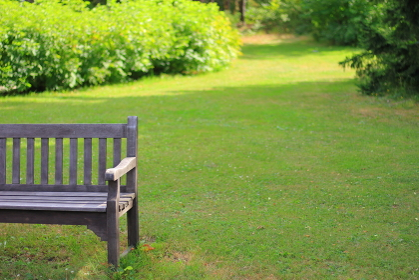 夏の芝生と木製ベンチ