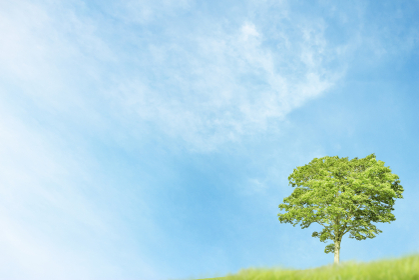 青空と一本の木の背景