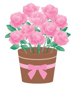 ピンクのバラの鉢植えのイラスト