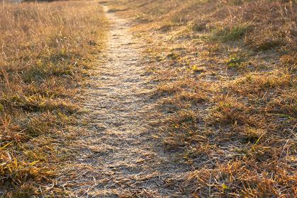 冬の夜明けの野原