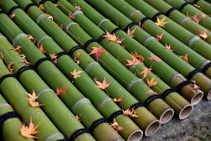 秋の円光寺 井戸の落ち葉 京都市