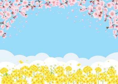 桜と菜の花畑 青空バックの背景イラスト(横長 A3・A4比率)
