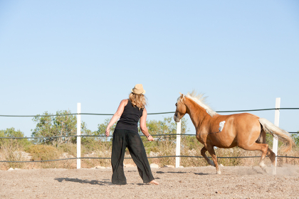 young female rider trains her horse outdoors in summer