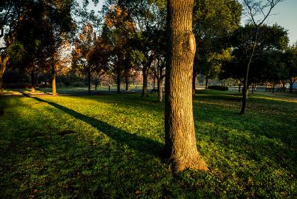 朝の公園の風景 12月 東京都足立区舎人公園