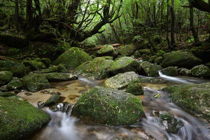白谷雲水峡、屋久島、鹿児島