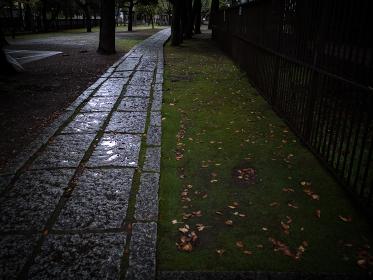 雨の日の神社の参道 10月