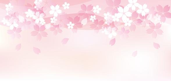 ふわふわした優しい桜のイラスト
