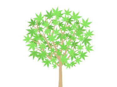 モミジの木のイラスト
