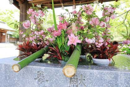 大分護国神社の手水舎に飾られた花