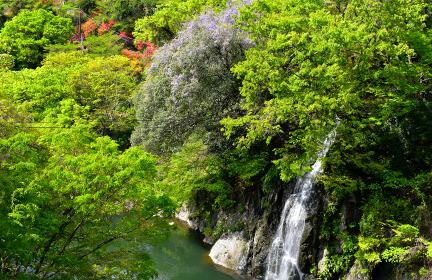 高津戸峡の新緑