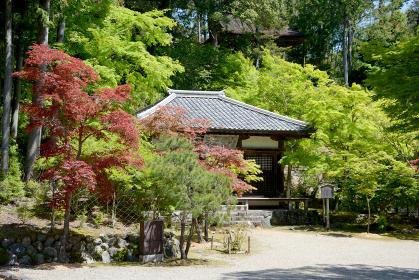 新緑の神護寺 明王堂 京都市高雄