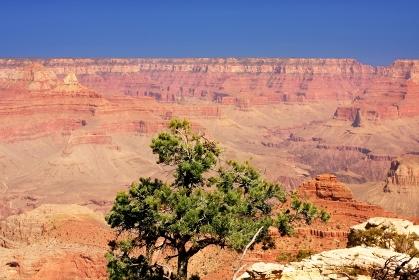 アメリカ合衆国・アリゾナ州 グランドキャニオン国立公園の風景
