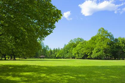 公園 芝生