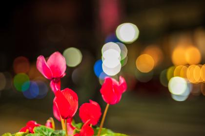 夜の街角の美しい花