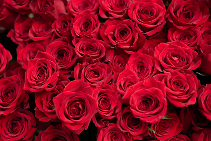 結婚や恋愛をイメージした真っ赤バラの花束