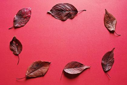 赤い紙の上に置いた落ち葉のフレーム。秋のイメージ。