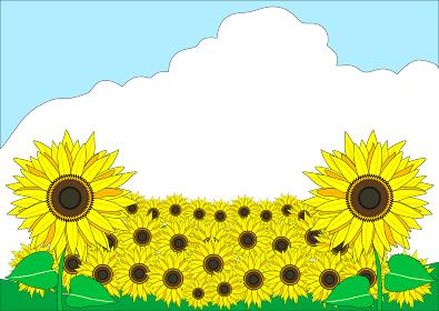 元気になる満開に咲いたひまわりの夏