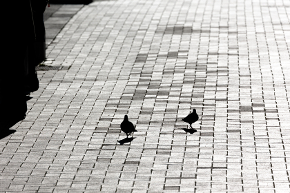 逆光に浮かぶ鳩のシルエット・神奈川県横浜市