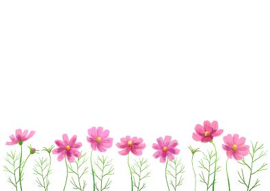 【背景素材】秋の花 コスモス畑イラスト