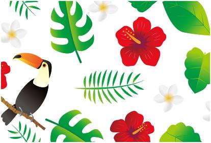 南国 亜熱帯植物