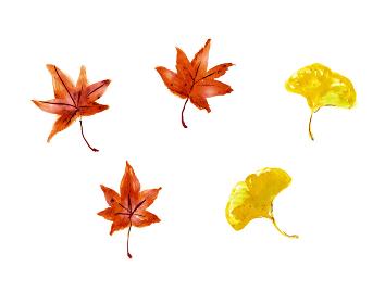 手描きイラスト素材 葉っぱ 紅葉 秋 もみじ 銀杏 イチョウ 落ち葉