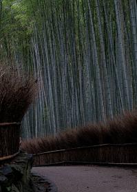 京都嵐山・竹林の小径