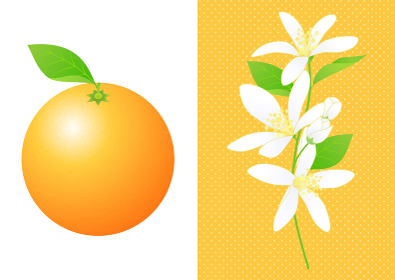 オレンジと花のセット