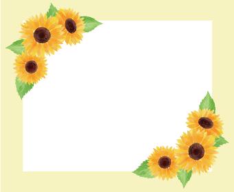 ひまわり ヒマワリ 向日葵 枠 フレーム 黄色 夏 花 イラスト 手描き