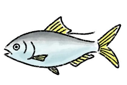 コハダ コノシロ 魚 手描き