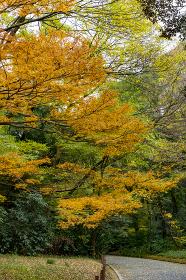 日本の四季 紅葉の季節