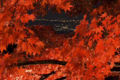 紅葉の向こうの夜景