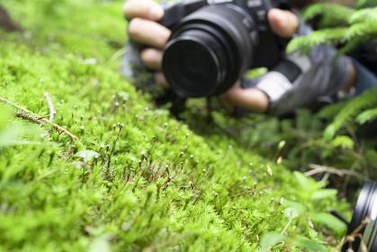 登山中に苔を撮影する男性ハイカー