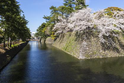 小倉城のお堀と石垣と桜の風景