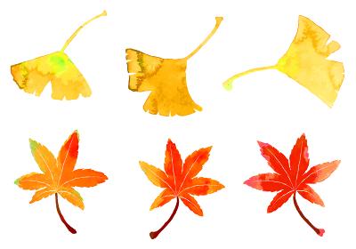 水彩のモミジとイチョウの切り抜きイラスト (葉脈はレイヤー)