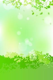 新緑と木漏れ日 背景素材