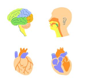 脳 心臓 口腔