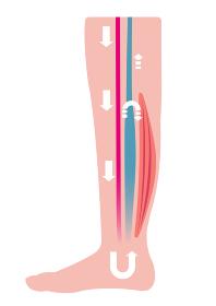 脚のむくみ(浮腫)の発生原因・過程 イラスト/ 血中の水分停滞による静脈圧の上昇