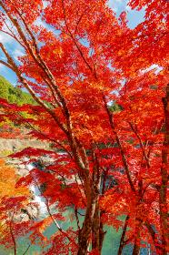 愛知県稲武町 大井平公園の紅葉