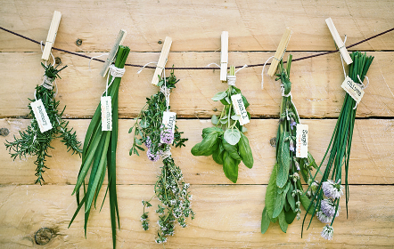 Assorted bunches of fresh herbs with name tags