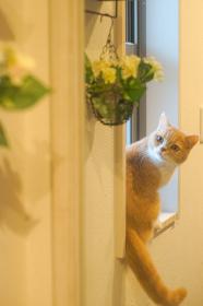 窓際で花を見つめる猫