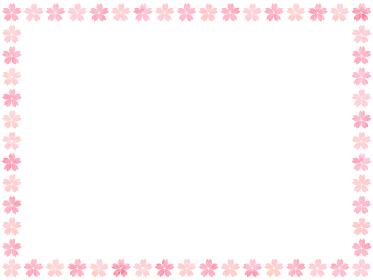 赤桜とピンク桜を並べた白い背景フレーム