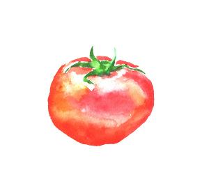 水彩で描いたトマトのイラスト