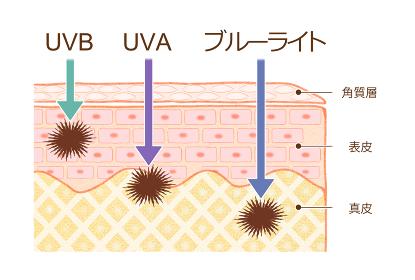 肌の断 UVAUVB ブルーライト