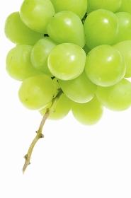 白バックに緑色の葡萄