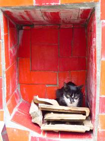 ブラジル・リオデジャネイロのセラロン階段でくつろぐ野良猫