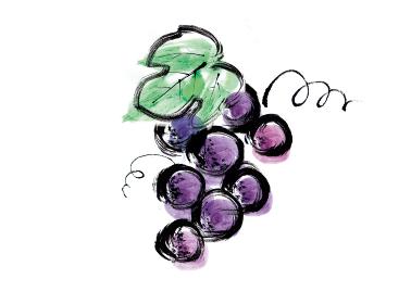 手描きイラスト素材 果物 ブドウ, 葡萄, ぶどう